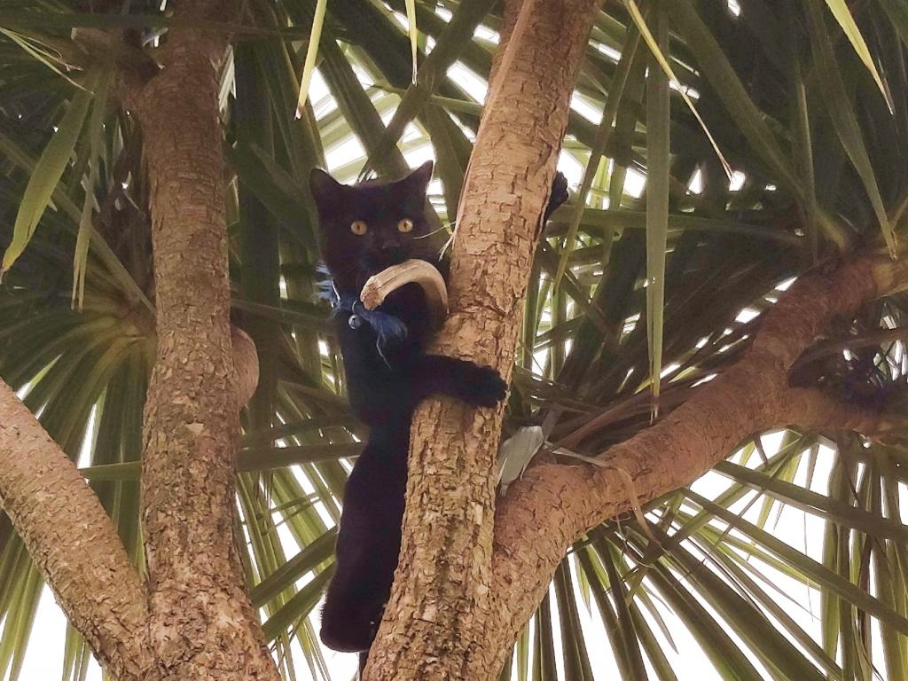 Black cat in a palm tree