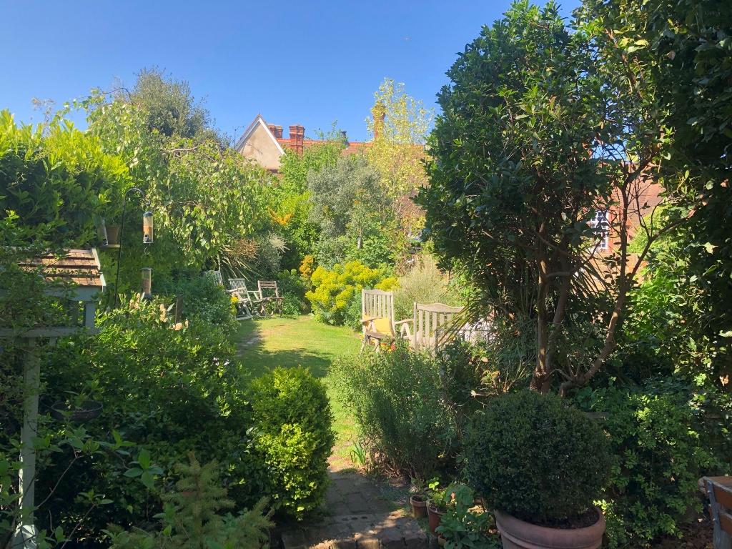 Back garden in the sun