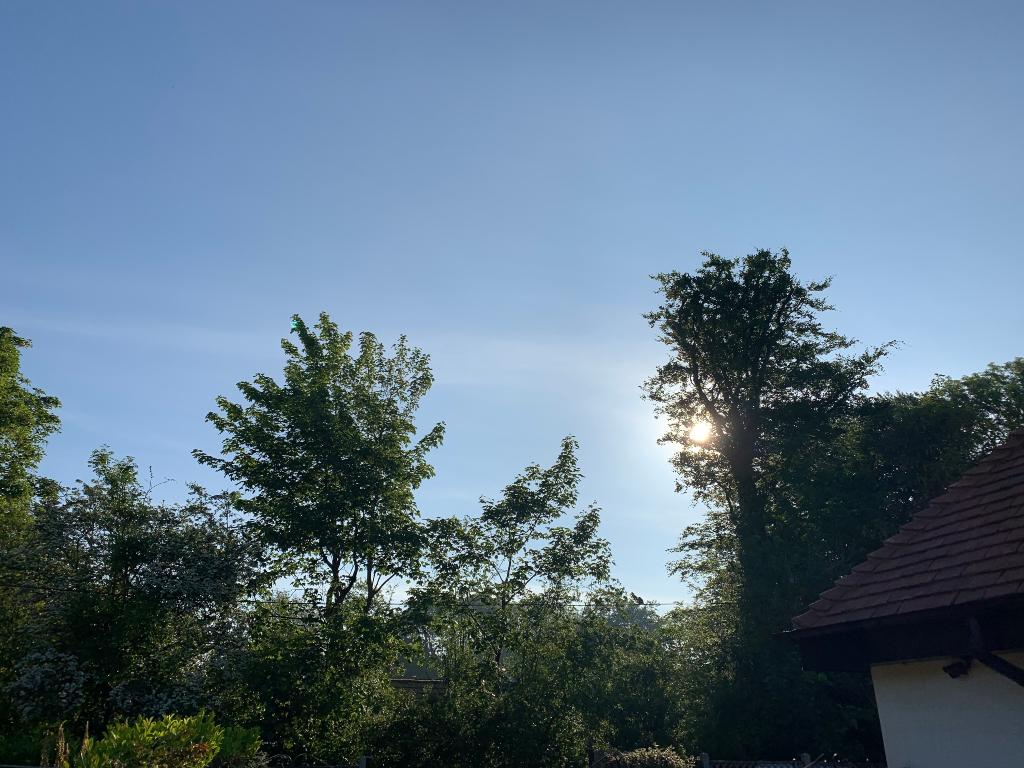 Sunshine poking through some trees