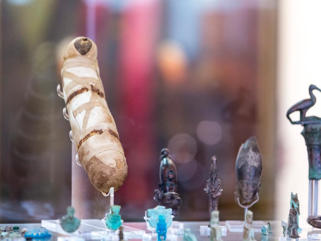 Mummified cat