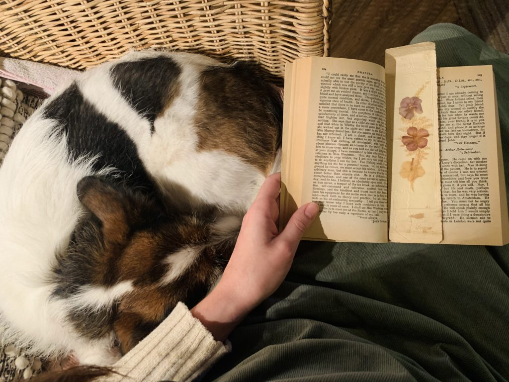 Book being held open on someone's lap with a dog next to them