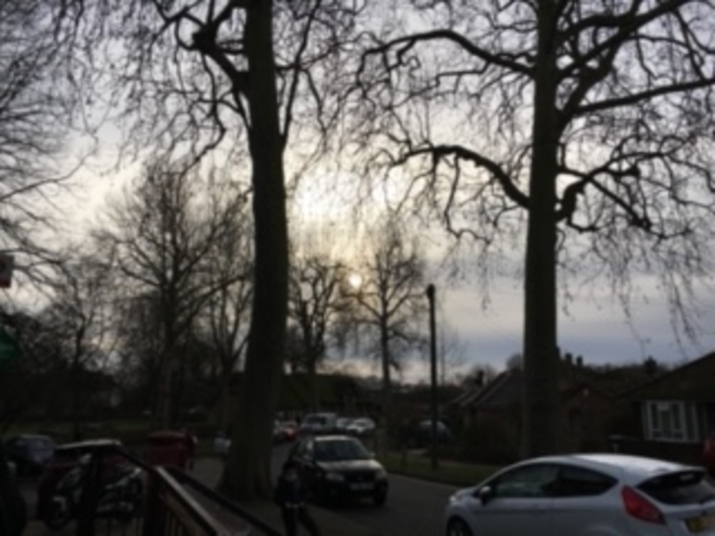 Cars parked on a road with large trees