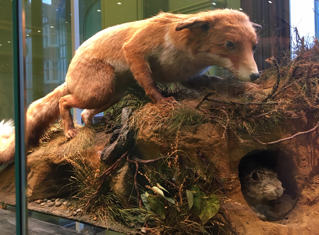 Red Fox and Rabbit