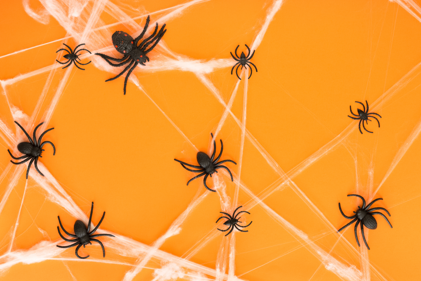 Fright at the Museum: Spider Stories